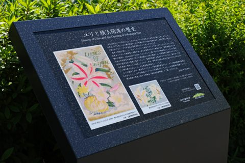 「ユリと横浜開港の歴史」記念碑